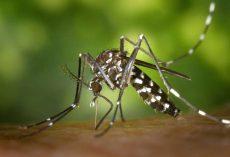 4 situazioni in cui è bene non avere a che fare con le zanzare