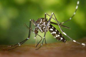 avere a che fare con zanzare